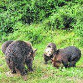 Neue Heimat für die Bären