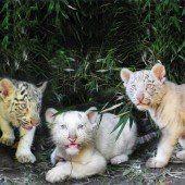Entzückendes Trio