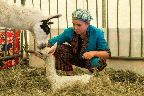 Feature, Tierbaby, Zirkus, Am 10.4.2014 um 03:00 Uhr morgens ist im Zirkus Kaiser (aktuell in Hard am Hafen) ein Lama-Baby zur Welt gekommen, auf dem bild marcel kaiser (13 jahre alt), sohn vom chef