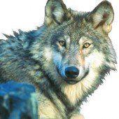 Der Wolf kommt