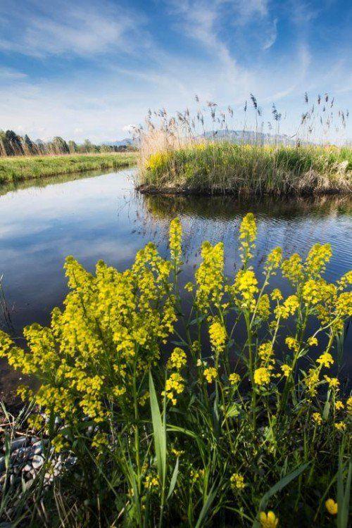 """""""Jeder kann zum Erhalt der Naturvielfalt einen Beitrag leisten"""", sagt Reinhard Bösch, Vorstand der Abteilung Umweltschutz. Foto: VN/sTeurer"""