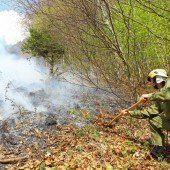 Acht Hektar großer Flächenbrand wütete auf Wiese und im Wald