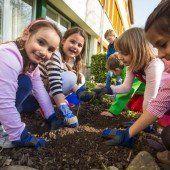 Dem Schulgarten neues Leben eingepflanzt