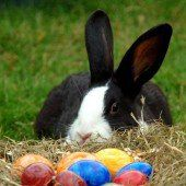 Von Ostereiern und Eierweihe