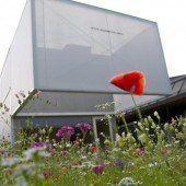 Blumensamen für Dornbirner Wiese erhältlich