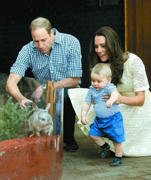 Zeigte sich begeistert von den Bilbys: Prinz George. Foto: ap