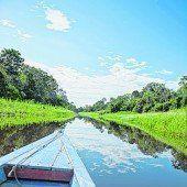 Amazonas und Regenwald
