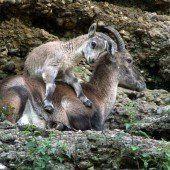 Babyboom im Salzburger Zoo