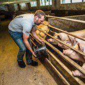Kleine Maßnahmen, die sich für die Nutztiere gleich positiv auswirken