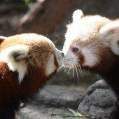 Küsschen von Mama
