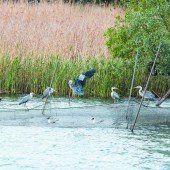 Fischernetze im Belagerungszustand