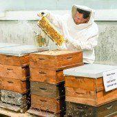 Herr der Festspiel-Bienen