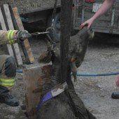 Lustenau: Rind aus der Jauchegrube gerettet