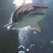Millionenbetrag für tote Haie