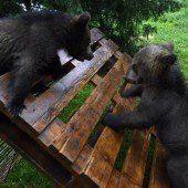 Neue Heimat für Bären-Waisenkinder