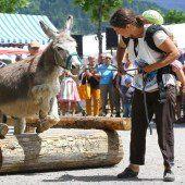 Ein Eselrennen und sehr viel Spaß