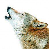 Die Wölfe im Tirolerland