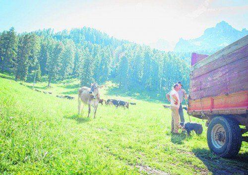 Für die Kühe geht's im Sommer auch auf die Alpen rund um Obereggen. Fotos: vn/beate rhomberg