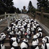 Pandas auf Welttournee
