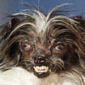 Hässlichster Hund der Welt