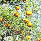 Wo Zitronen und Orangen blühen