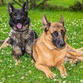 Bosco und Benny sind Papa und Sohn und suchen gemeinsam ein neues Zuhause
