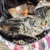 Schmusekatzen und liebe Hunde suchen ein neues Zuhause