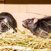 Herbert, Oswald und ihre Freunde