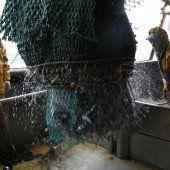Die Fischbestände im Mittelmeer schrumpfen