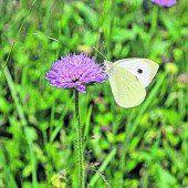 Zeit für Flora und Fauna