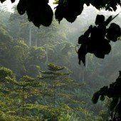 So können Vorarlberger Regenwald schützen