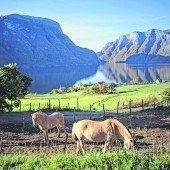 Auf dem Pferd durch Norwegen