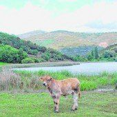 Montcortès: Der Fünfte See