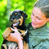 Jubiläum mit Militärhunden