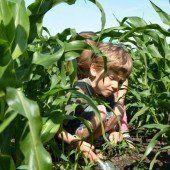 Maisprojekt für das Haus für Kinder in Wolfurt