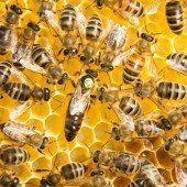 Bienenmarkt in Altach