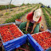 Osteuropa verliert den Kampf gegen Landraub