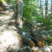 Klostertaler Bergwälder – Natura- 2000-Gebiet
