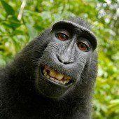 Rechte für Affen-Selfie liegen bei niemandem