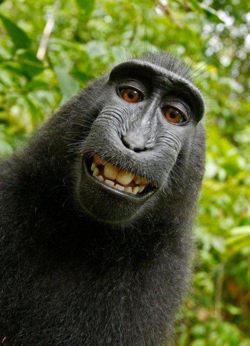 Cheese: Dieser technikaffine Affe machte kurzerhand ein Selfie.