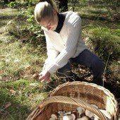 Sammeln von Pilzen birgt Gefahren