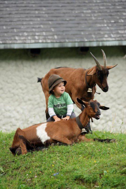 Der kleine Jakob aus Au spielt immer gerne mit seinen Ziegen, egal wie das Wetter ist.  Foto: Berchtold