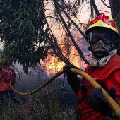 Waldbrände in Portugal wieder unter Kontrolle