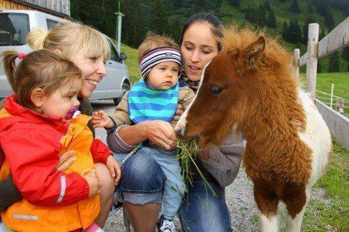 Die Attraktion bei Kindern und Erwachsenen war das süße Fohlen, das jedem buchstäblich aus der Hand fraß. Fotos: VN/Hofmeister