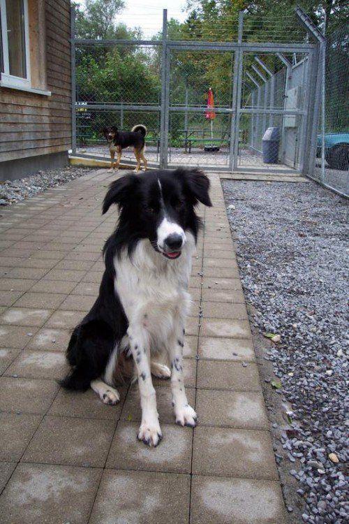Fly, Waldi und Rico warten im Dornbirner Tierheim. Fotos: MK