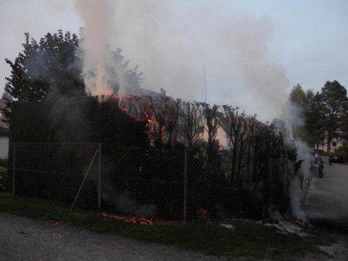 Brandstifter dieser brennenden Hecke gesucht. Foto: Polizei