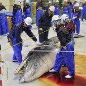 Japan will Walfang in der Antarktis fortsetzen