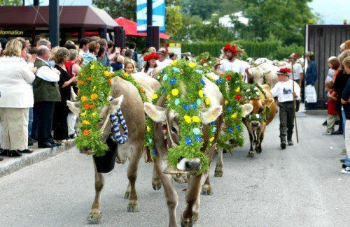 Der Sommer ist zu Ende – zumindest auf der Alpe. Zurzeit werden im ganzen Land die Kühe ins Tal gebracht. Foto: Zellhofer