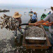 Fischsterben wird untersucht