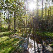 Auwälder – Ein Lebensraum im Wandel